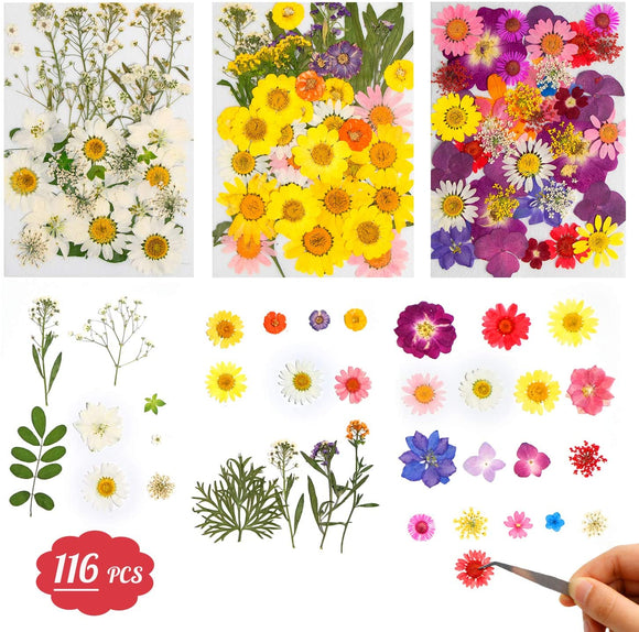 Limited Offer / Dried Flowers - 116 PCS ( Please read the details carefully )