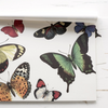 Butterflies Placemat