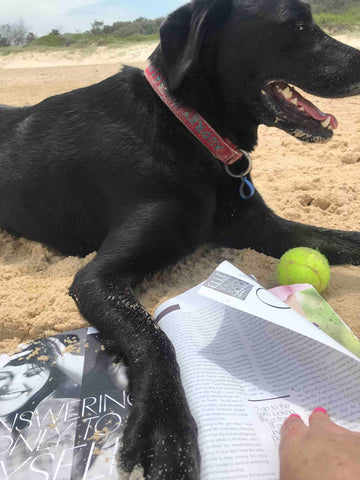 Black Lab beach