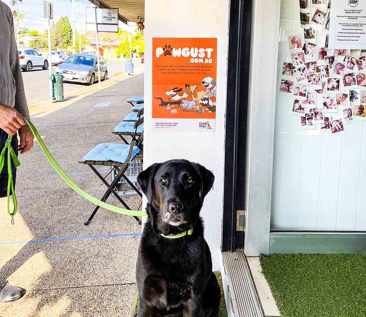 Black Labrador with poster