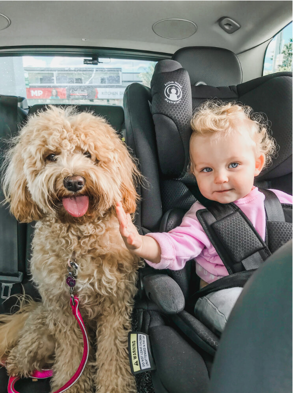 Lost dog with toddler