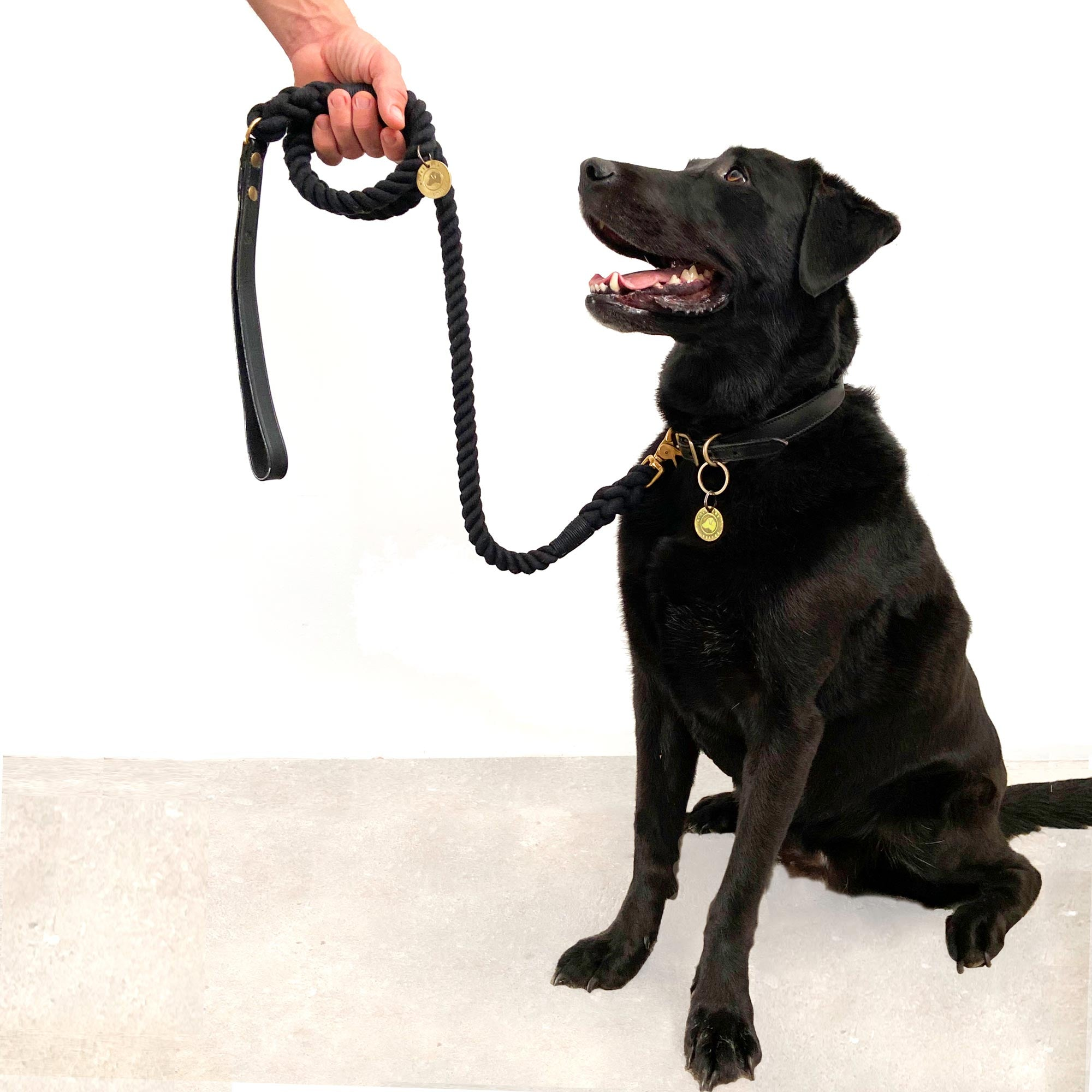 Black Labrador with lead and collar
