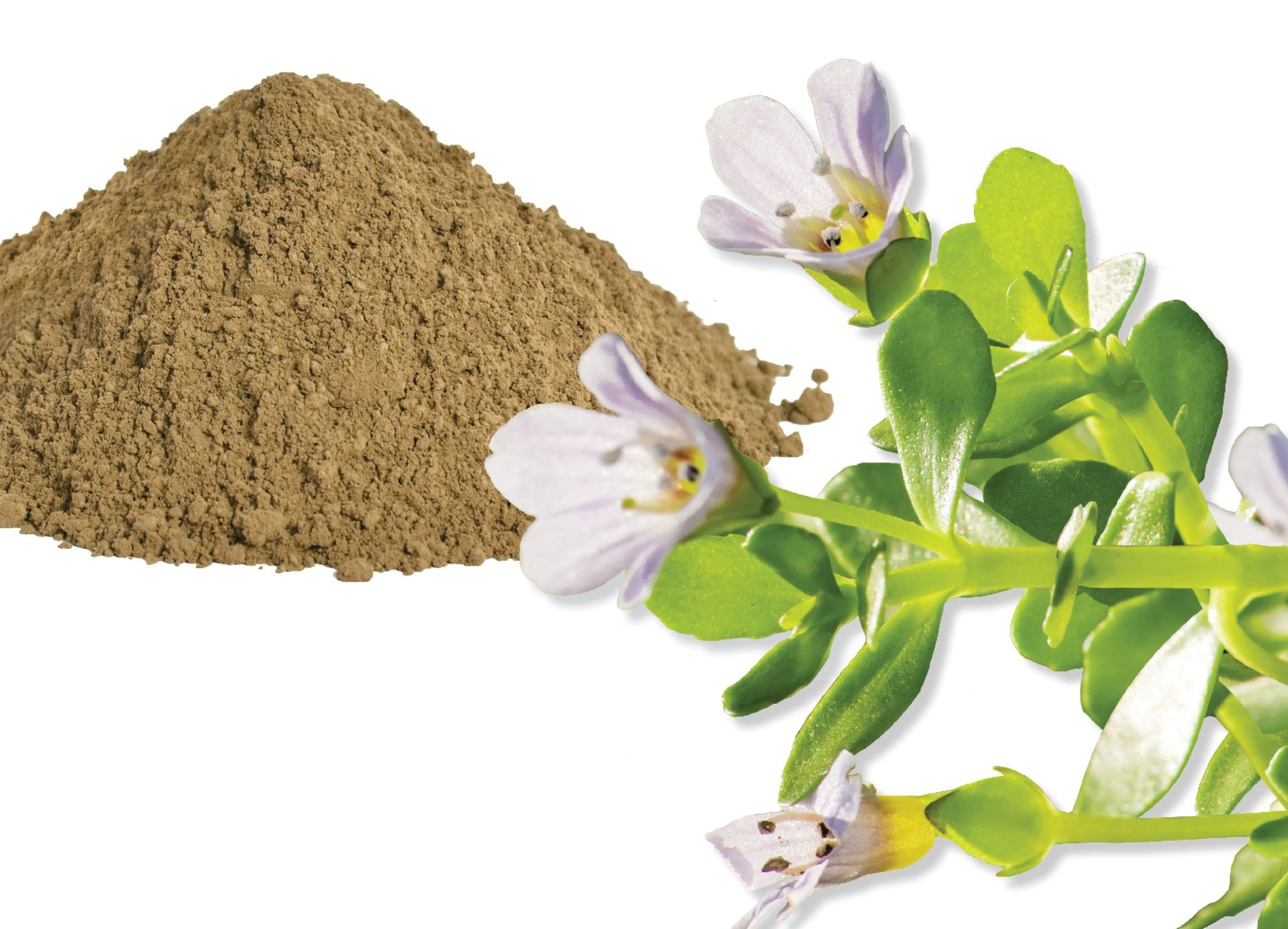 Benefits of Bacopa on your Health