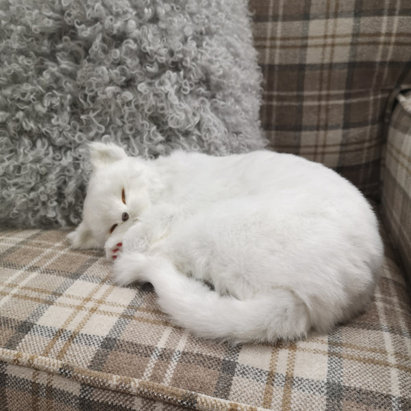 "12"" Sleeping cat - White"