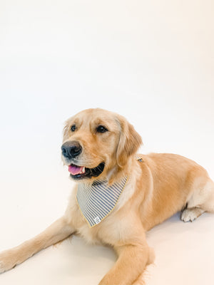 The Foggy Dog French Blue Striped Bandana
