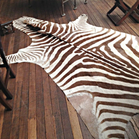 Antique Zebra Hide