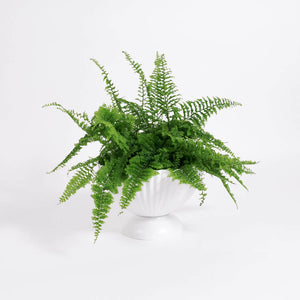 Load image into Gallery viewer, Fern, Fluffy Ruffle