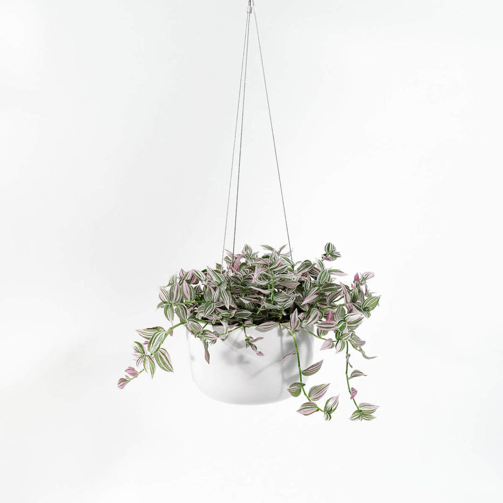 Load image into Gallery viewer, Ceramic Modern Hanging Planter