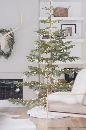 Silver Tip Christmas Trees & Decorating Packages