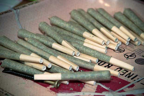 the science behind marijuana - dozens of rolled joints