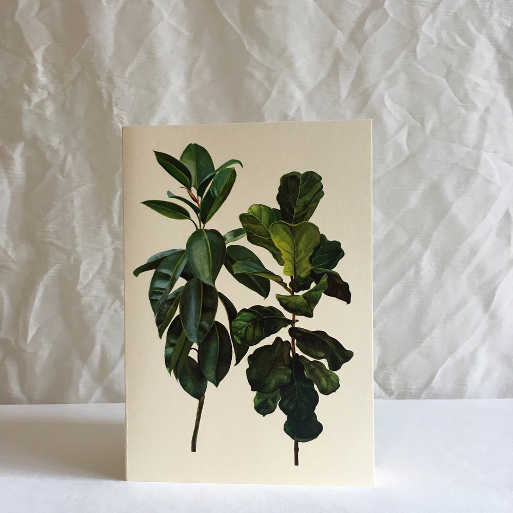 Greeting card - Rubber tree & Fig