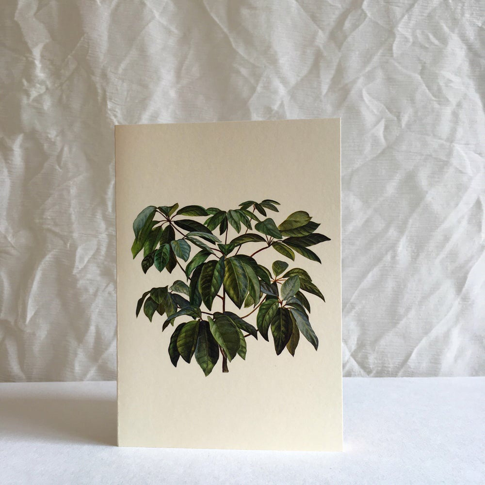 Greeting card - Ficus