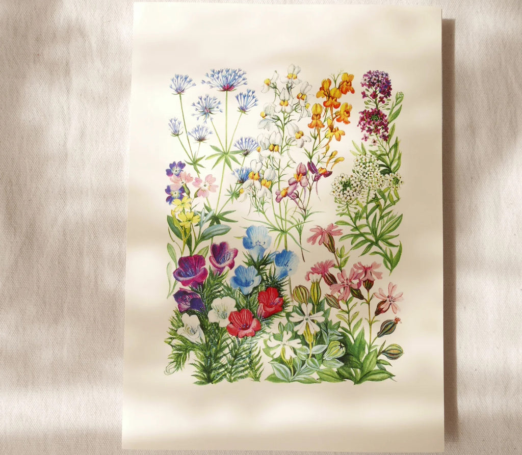 Greeting Card - Snapdragon and Lobularia