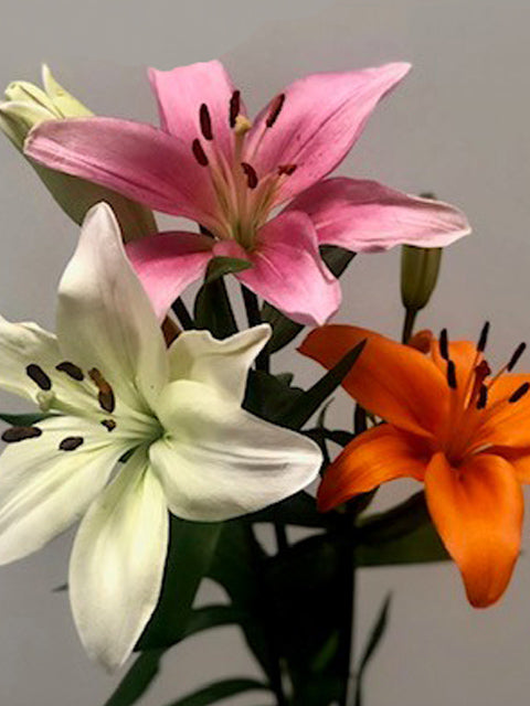 Asiatic Lilies - Pink (70 Stems)