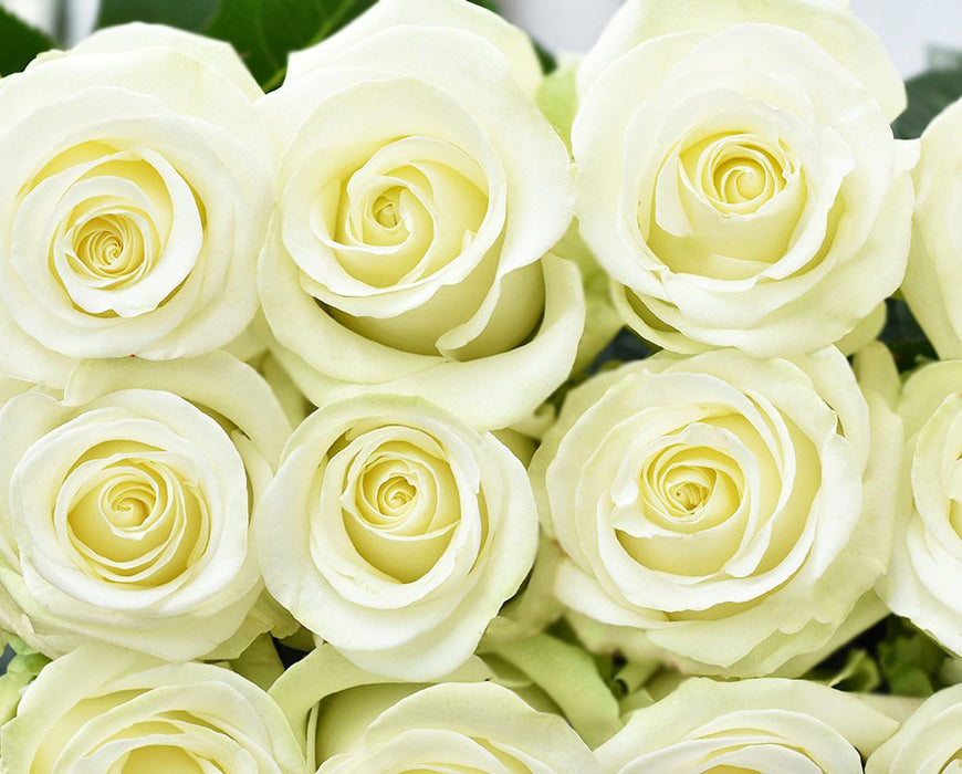 Igloo Rose (100 Stems)