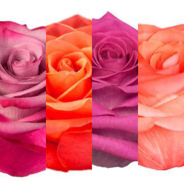 MIX&MATCH - Deep Purple | Orange Crush | Pink Floyd | Show Girl (100 STEMS TOTAL)
