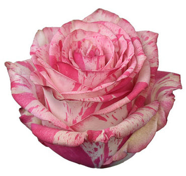 Next Day Ship - Magic Times Rose (100 STEMS)