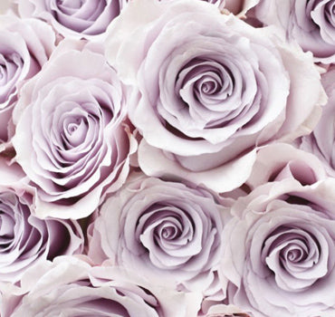 Next Day Ship - Silver Mikado Spray Rose (100 STEMS)