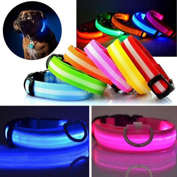 LED Dog Collar - 5 Colours