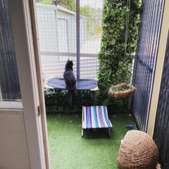 pet accommodation cattery Perth cat boarding