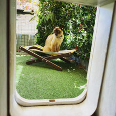 pet accommodation cattery Perth cat boarding vet on site