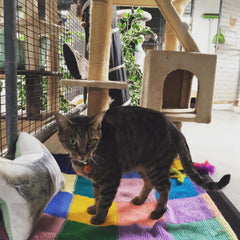 cattery Perth cat boarding pet accommodation
