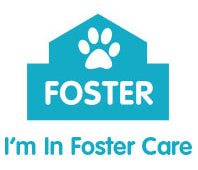 Cat Haven Foster Care