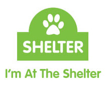 Cat Haven Shelter Care