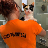 Volunteer at Cat Haven - Help Rescue Cats
