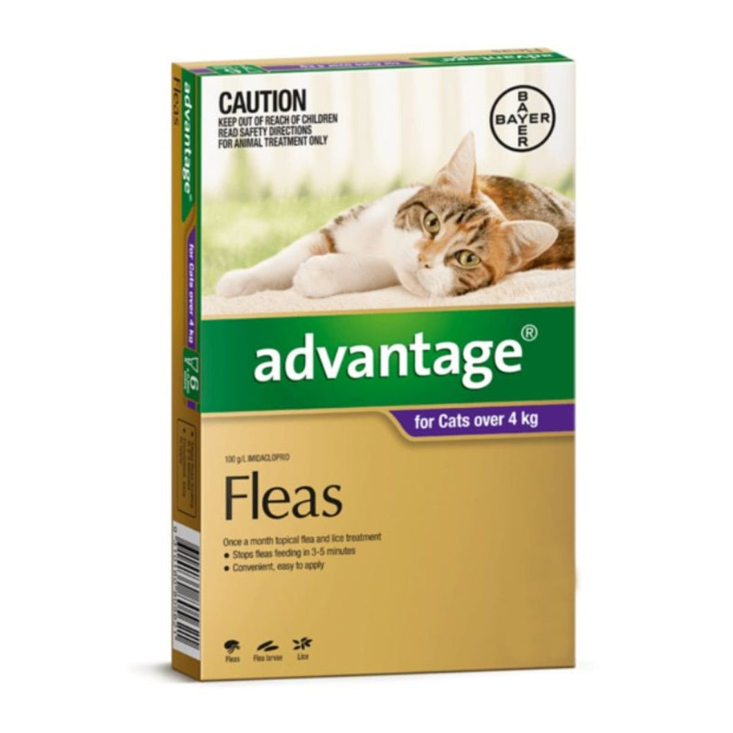 advantage-cat flea treatment cat toys, cat boarding Perth, Cat Haven, Perth, cat food, cat products, lost & found cats
