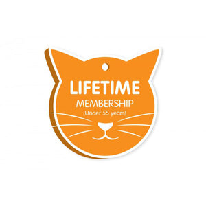 rescue cats, adopt/foster cats, cat beds, cat food, cat toys, Cat Haven, Perth