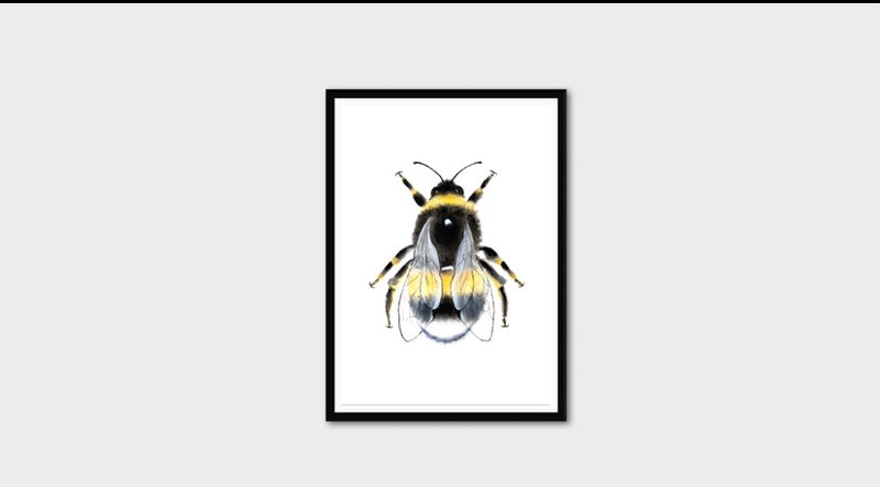 White Background Manchester Bee Print Photo Art