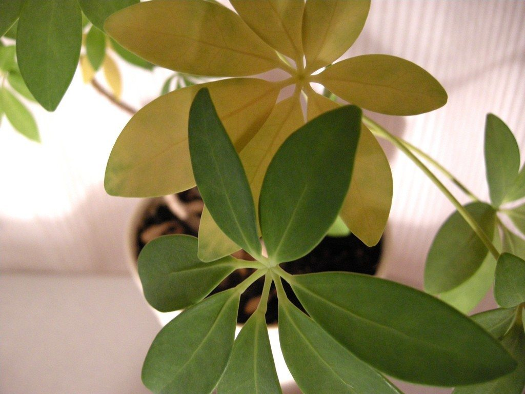 6 Common Houseplant Illnesses and How to Cure Them