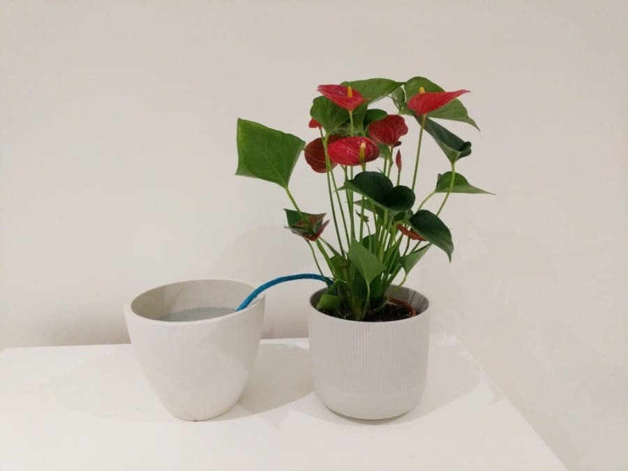 wick watering plant