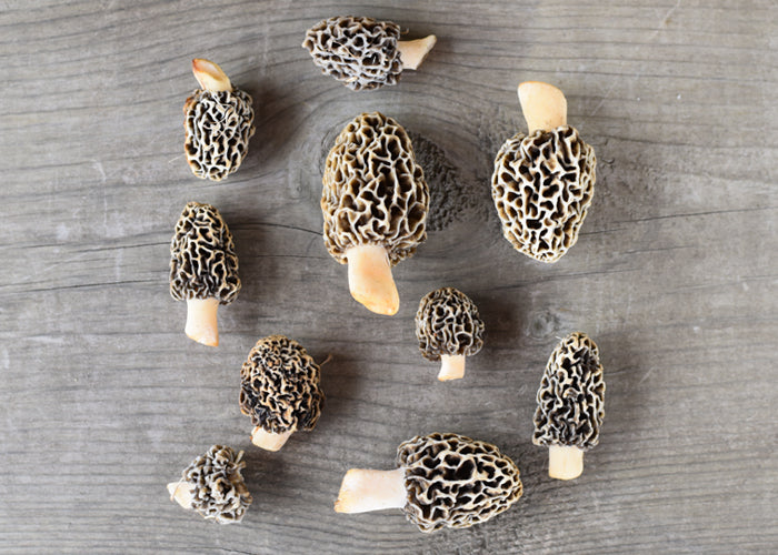 June & December Michigan Roots Story - Morels