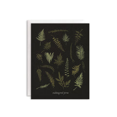 Endangered Ferns Cards : Boxed Set of 8