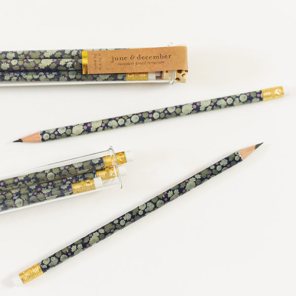 Succulent Pencil Terrarium : Set of 5 Pencils