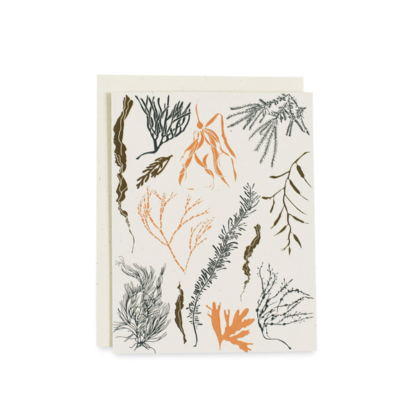 Atlantic Seaweeds Card