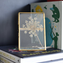 Brass Framed Specimen : Queen Anne's Lace