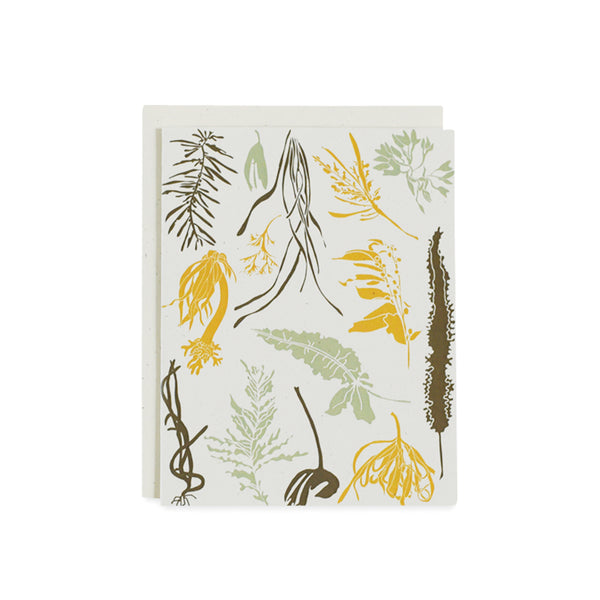 Pacific Seaweeds Card