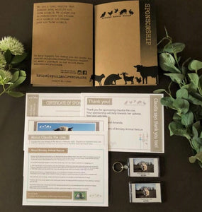 Claudia the Highland cow annual sponsorship pack for Brinsley Animal Rescue, Nottingham.