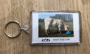 Maisy The Cow Annual Sponsorship Pack For Brinsley Animal Rescue, Nottingham.