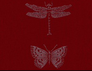 Merino Wool Red Dragonfly Scarf - Kate Watts