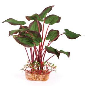 Kazoo Silk Plant - Large Leaf Dark Green