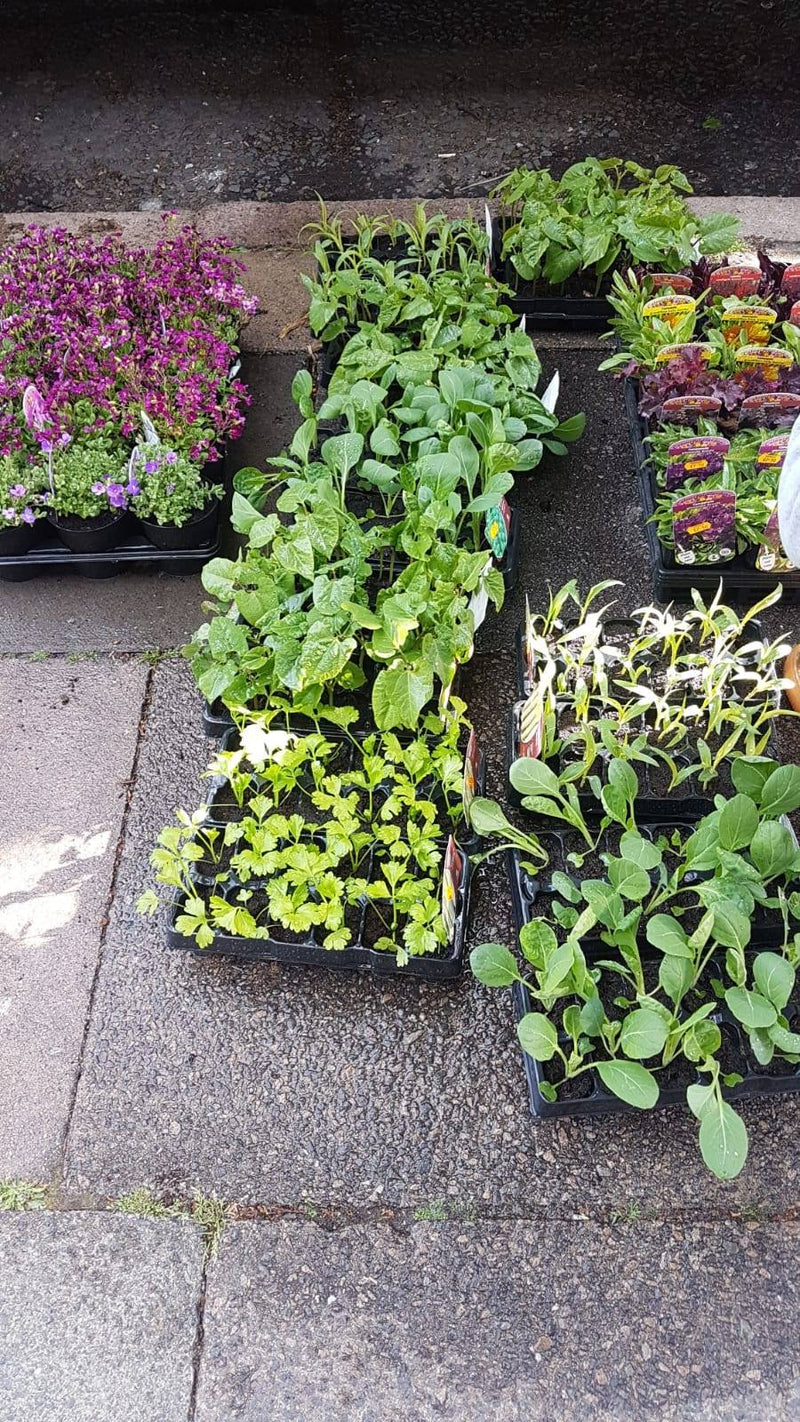 Vegetable Plants - (LOCAL PICKUP / DELIVERY ONLY)