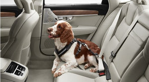 Volvo Dog Harness