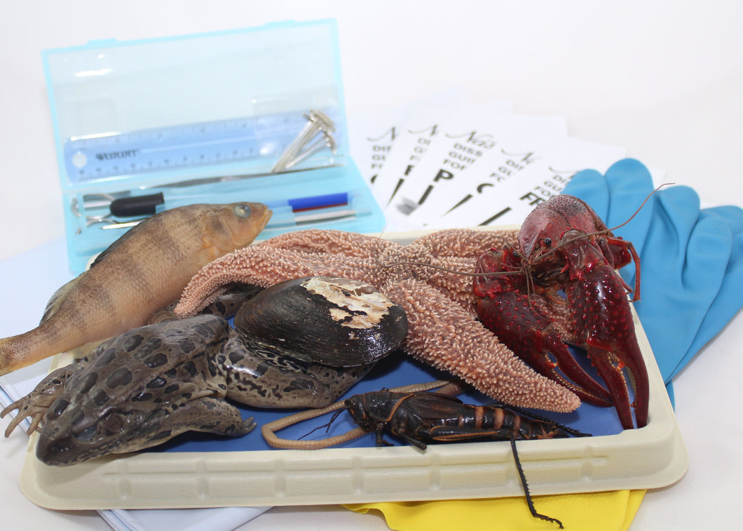 Intermediate Dissection Lab Kit