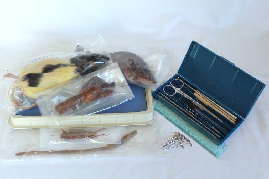 Bob Jones Biology Dissection Kit