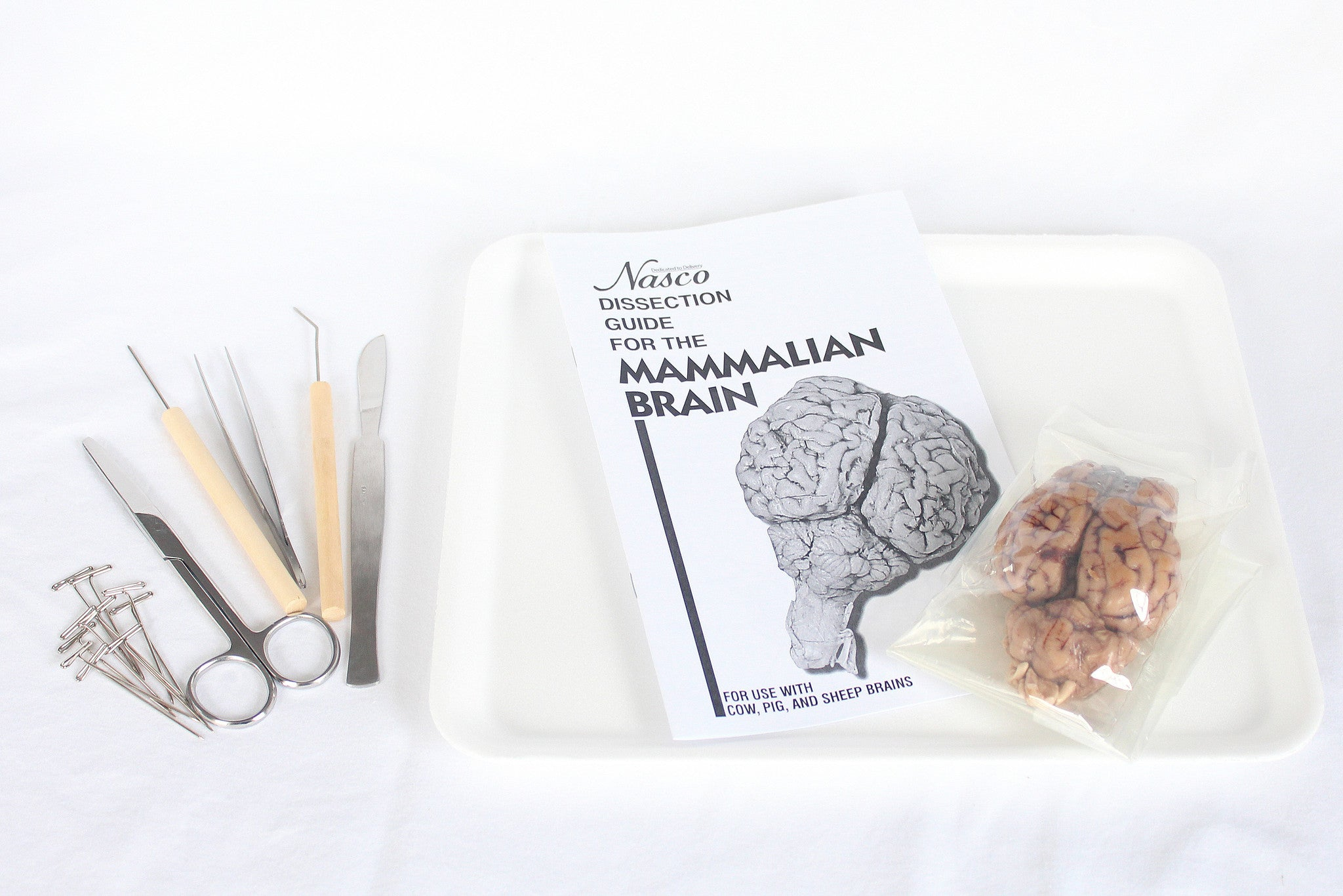 Sheep Brain Dissection Kit | Home Educational Resources