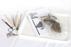Frog Dissection Lab Kit